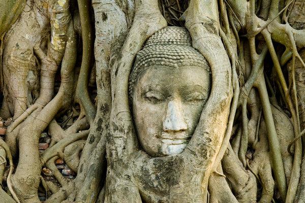 Buddha in Banyan Tree